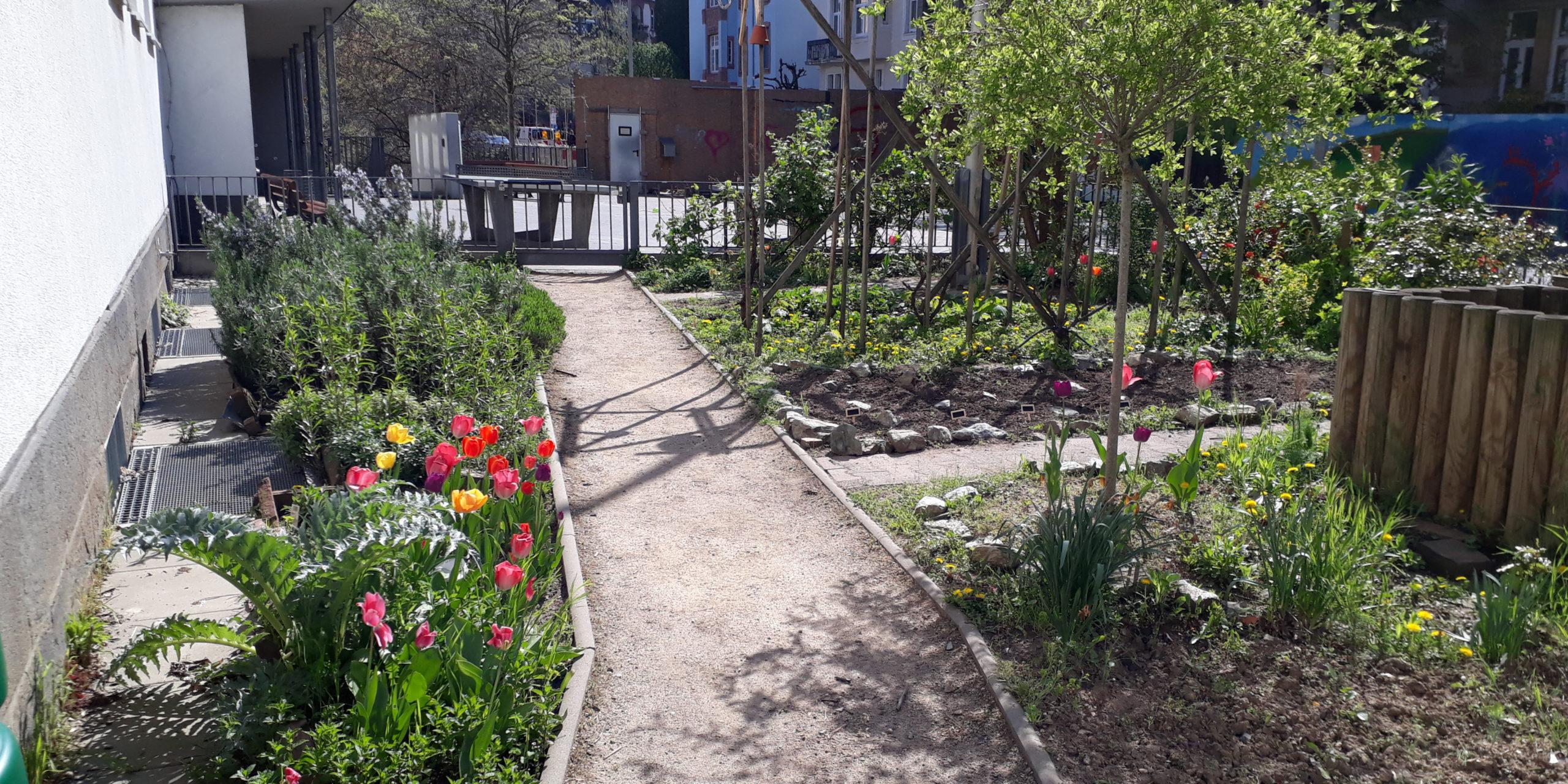 Schulgarten4